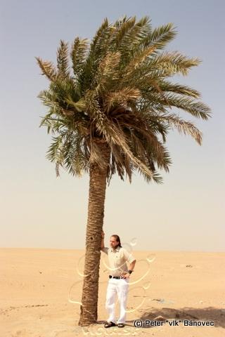 Vĺčik pod palmou