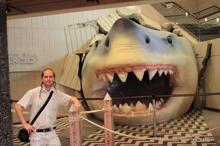 Obrovský žralok vo vstupnej hale TSCK