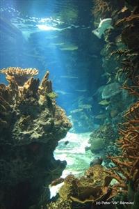 Obrovské akvárium - výška min. 3 metre