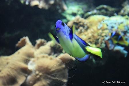 Jedno z menších akvárií s rybami
