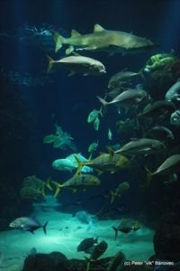Iný pohľad do akvária