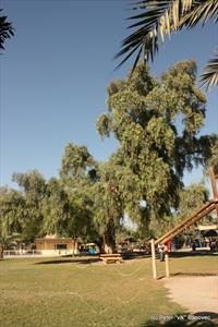 Zeleň v ZOO, kam si chodia Kuvajťania oddýchnuť