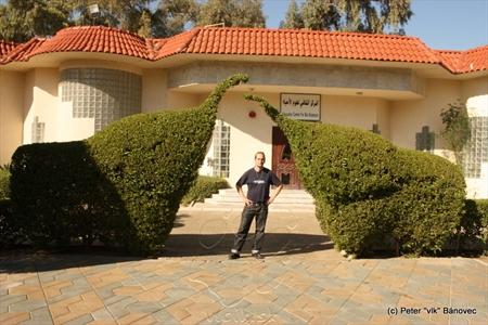 Kríky upravené ako slony...