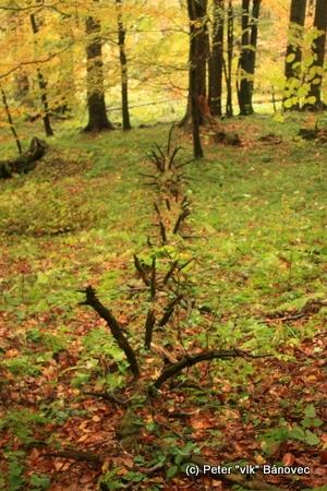 les je plný života a hýri farbami... v každom ročnom období...