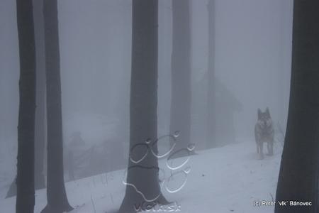 Chajda v hmle