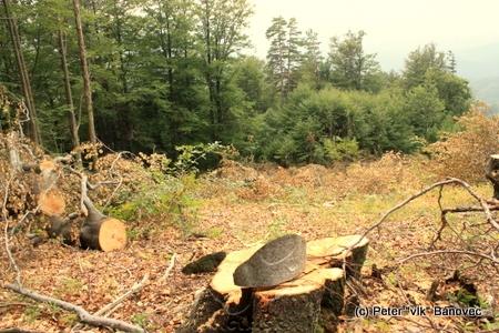 Tu bol predtým les...