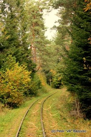koľaje lesnej železničky