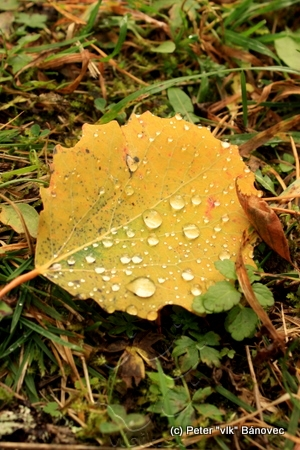 list po nočnom daždi