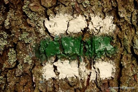 Zelená nás držala celý deň...