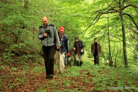 Výprava v lese