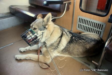 Pes vo vlaku