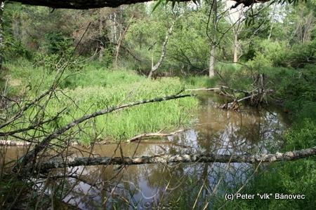 rozľahlá vodná plocha bobrej hrádze