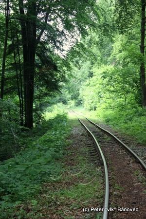 trať lesnej železničky vedúcej cez les