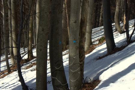 najkrajší les je už odsúdený...